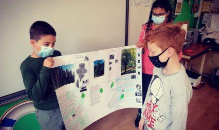ПРОЈЕКТНА НАСТАВА – Животне заједнице (биљни свет)